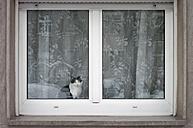 Germany, Hesse, Frankfurt, Cat looking through window - MUF001304