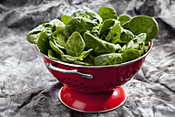 Spinach leafs in red colander, close up - CSF018077