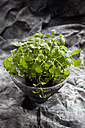 Lovage herb in pot, close up - CSF018080