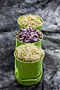 Various sprouts in container, close up - CSF018140