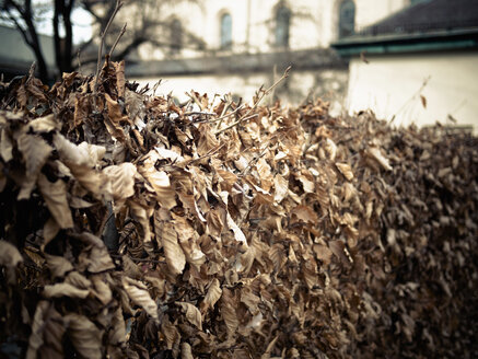 Germany, Munich, Dry leaves in front of church - LF000495
