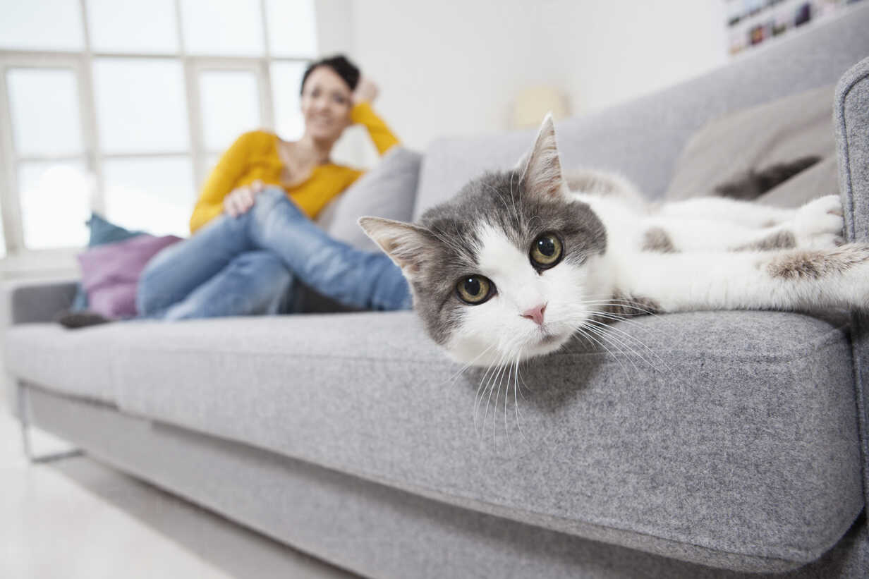Germany, Bavaria, Munich, Mid adult woman with cat on couch, smiling - RBF001295 - Rainer Berg/Westend61