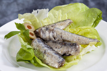 Plate of sardines in oil, close up - CSF018764