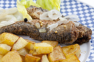 Fried herring with roasted potatoes and onions on a plate - CSF018794