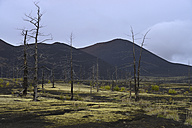Russia, View of Tolbachik volcano near dead forest - RM000508