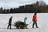 Family taking christmas tree on sledge - LB000029