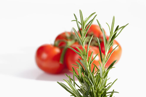 Rosemary herb with tomatoes on white background, close up - CSF019077