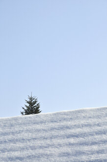 Fir tree behind snowy rooftop - AXF000455