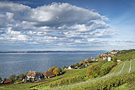 Germany, Baden Wuerttemberg, View of Rebgut Haltnau vineyard at Lake Constance - EL000020