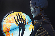 Skeleton holding globe, close up - JAT000005