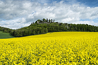 Germany, Baden Wuerttemberg, View of Yellow rape field - EL000148