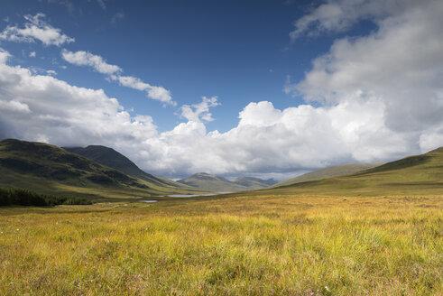 Scotland, United Kingdom, View of Heathland at Northwest Highlands - ELF000188