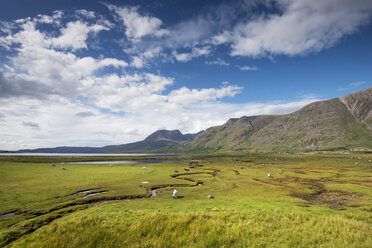 United Kingdom, Scotland, View of marshy landscape at shore of Lake Torridon - ELF000182