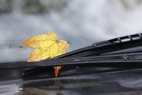 Germany, Cologne, Autumn leaf on windscreen - JAT000021