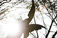 Germany, Cologne, Angel statue in graveyard - JAT000058