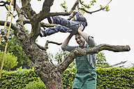 Germany, Cologne, Father helping son to climb tree, smiling - RHYF000388