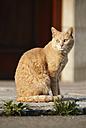 Germany, Baden Wuerttemberg, Satteldorf, Cat sitting on road, close up - SLF000174