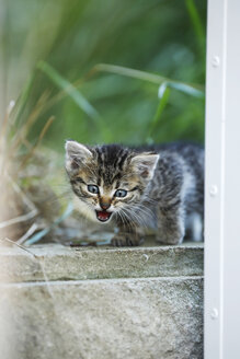 Germany, Baden Wuerttemberg, Kitten sitting, close up - SLF000189