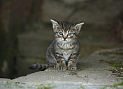 Germany, Baden Wuerttemberg, Kitten sitting on wall - SLF000212