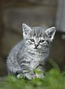 Germany, Baden Wuerttemberg, Kitten looking away - SLF000219