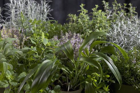 Varieties of herbs, close up - CSF019652
