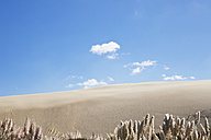 New Zealand, View of Te Paki Giant Sand Dunes - GW002277