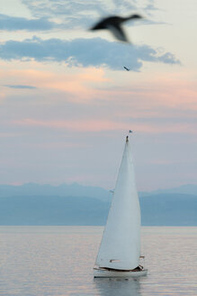 Germany, View of sailing boat in lake constance - SH000768