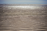 Denmark, Romo, Sand dunes at North Sea - MJF000251
