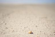 Denmark, Romo, Shell on sand at North Sea - MJF000252