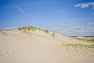 Denmark, Romo, Sand dunes at North Sea - MJF000254