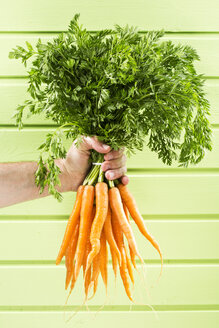 Mature man holding bunch of carrots against green background, close up - MAEF006881