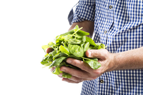 Mature man hold spinach leaves, close up - MAEF006869