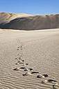New Zealand, Footprints on Te Paki Sand Dunes - GW002299