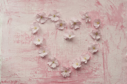 Heart shaped formed with pink cherry blossom, close up - ASF005035