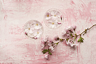 Pink cherry blossom in glass, close up - ASF005024