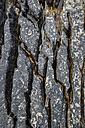 United Kingdom, Scotland, View of lava formation on Elgol Bay - ELF000284
