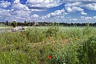 Germany, North Rhine-Westphalia, Dusseldorf, Poppies in field near Kaiserswerth - MFF000642