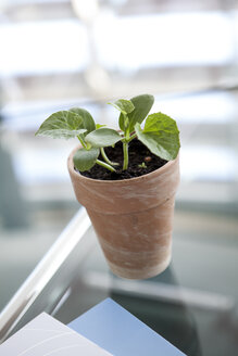 Plant on conference room table - KFF000062