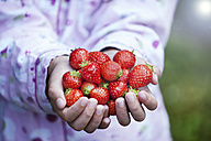 Germany, North Rhine Westphalia, Cologne, Girl holding strawberries in hands, close up - FMKYF000503