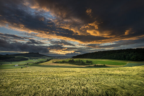Germany, Baden Wuerttemberg, Constance, View of wheat field in sunset - ELF000301