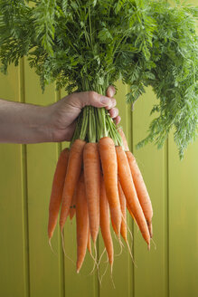 Human hand holding bunch of carrots, close up - ECF000291
