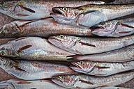Italy, Apulia, Fresh codfish in market - DIK000055