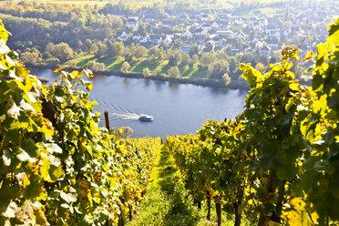 Germany, Rhineland Palatinate, View of vineyards at Punderich - AMF000843