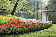 Holland, Springtime garden with tulips - RUE001090