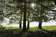 Germany, Bavaria, Sun with sunbeams through trees - RUEF001098