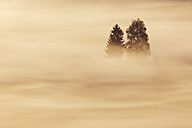 Germany, Bavaria, Morning mist above Kochelmoor - RUEF001114