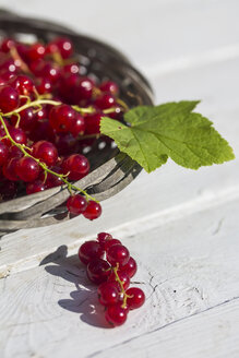 Germany, Bavaria, Red currants in basket - SARF000093