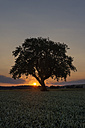 Germany, Baden Wuerttemberg, View of old tree at sunset - ELF000359
