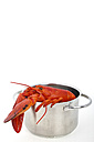 Lobster in casserolle on white background, close up - KRPF000009