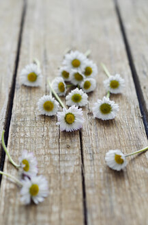 Daisies on wooden table, close up - CZ000030